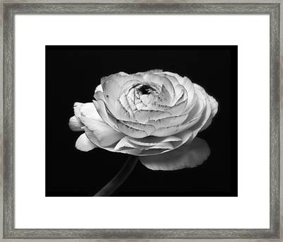 Black And White Roses Flowers Art Work Photography Framed Print