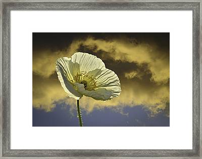 Prelude To Spring Framed Print by Lynn Bauer