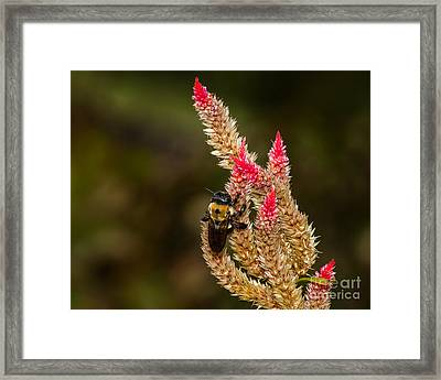 Premature Hunt Framed Print by Dale Nelson