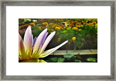 Prepare For Breakfast Framed Print by Suradej Chuephanich