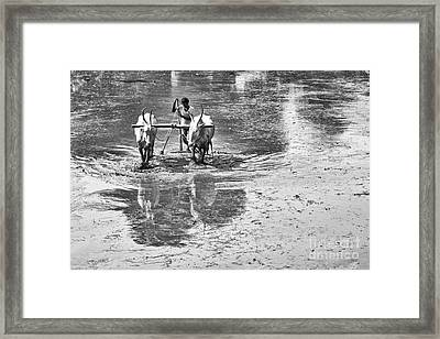 Preparing A Rice Paddy Framed Print by Tim Gainey