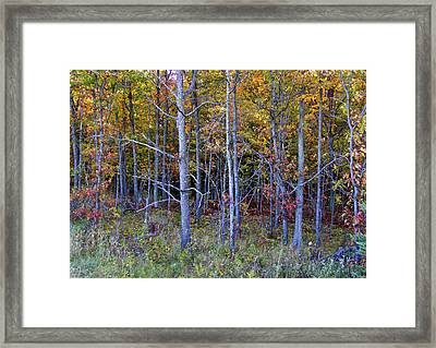 Preparing For Fall Framed Print
