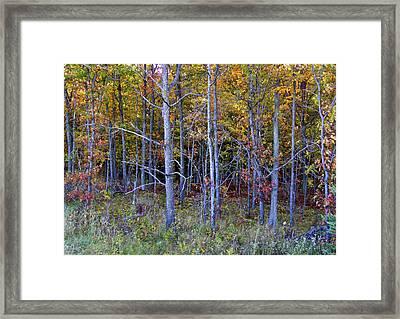 Preparing For Fall Framed Print by Susan Crossman Buscho