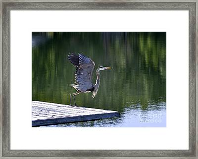 Framed Print featuring the photograph Preparing For Take Off by Nava Thompson