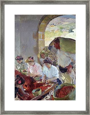 Preparing The Dry Grapes Framed Print by Joaquin Sorolla y Bastida