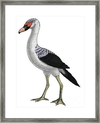 Presbyornis, An Extinct Genus Framed Print by Vitor Silva