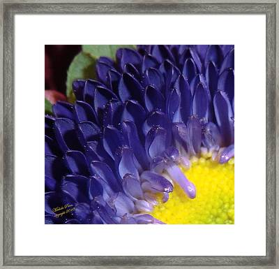 Present Moments - Signed Framed Print