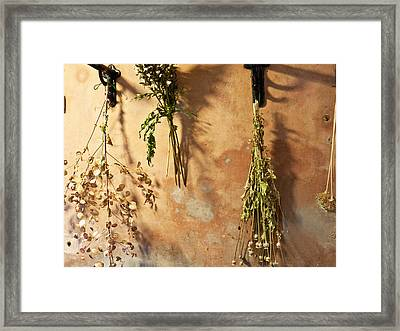 Preserving Summers Gifts. Framed Print