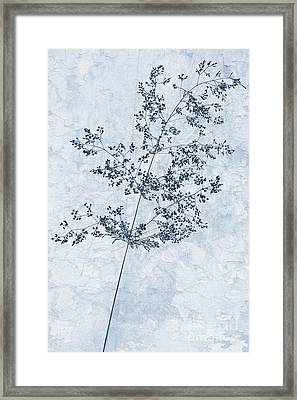 Pressed Grass Cyanotype Framed Print by John Edwards