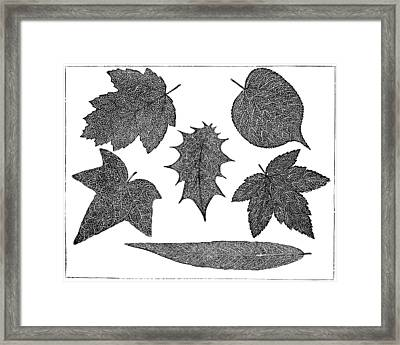 Pressed Leaves, 1890 Framed Print by Science Photo Library