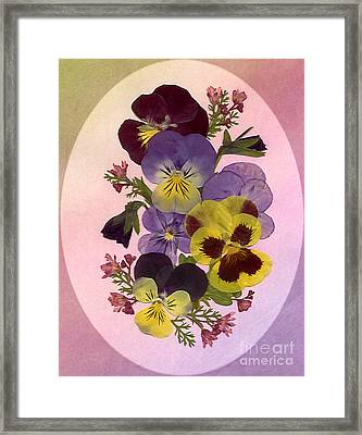 Pressed Pansies Framed Print