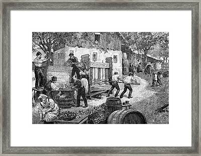Pressing Apples Framed Print by Bildagentur-online/tschanz