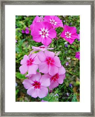 Pretty - Pink - Wildflowers Framed Print by D Hackett