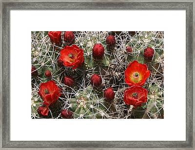 Pretty And Dangerous Framed Print