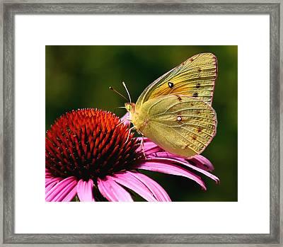 Pretty As A Butterfly Framed Print