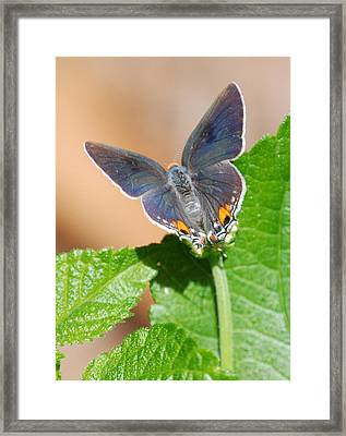 Pretty As A Flower Framed Print by Kathy Gibbons