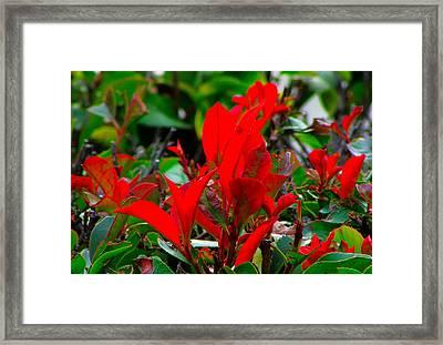 Pretty As A Pic Framed Print by Gayle Price Thomas