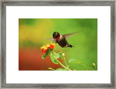 Pretty As A Picture Framed Print by Lori Tambakis