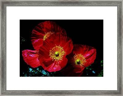 Pretty As A Poppy Framed Print