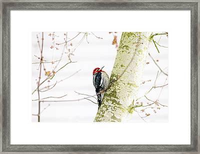 Pretty Bird Framed Print by Rebecca Cozart