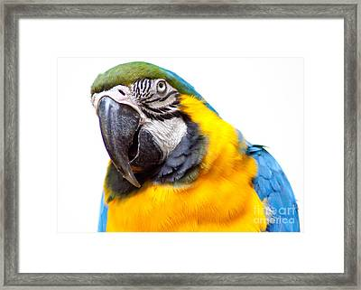 Framed Print featuring the photograph Pretty Bird by Roselynne Broussard