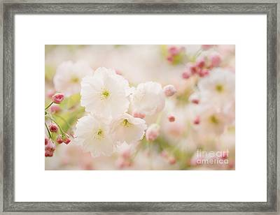 Pretty Blossom Framed Print by Natalie Kinnear