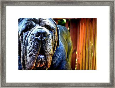 Pretty Boy Framed Print