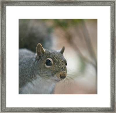 Pretty Boy Framed Print by Debbie Sikes