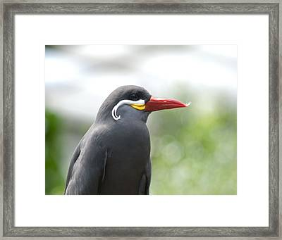 Pretty Boy Wil 193 Framed Print