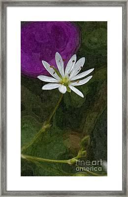 Pretty Chickweed Oil Framed Print