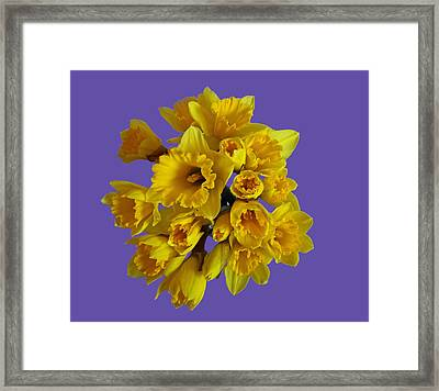 Pretty Daffodils Framed Print by Christopher Rowlands