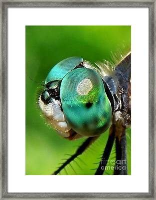 Pretty Eyes Framed Print by Renee Trenholm