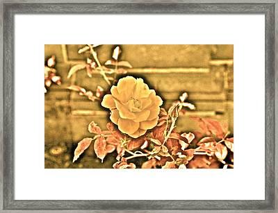 Pretty Flower Framed Print by Joe  Burns