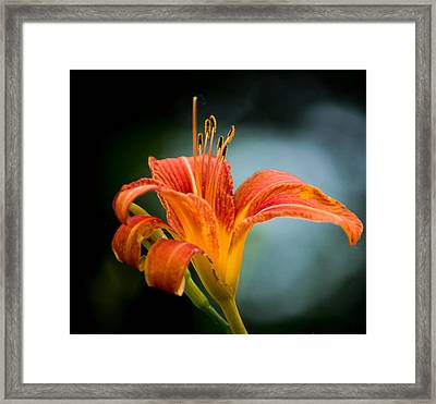 Pretty Flower Framed Print