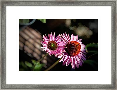 Pretty Flowers Framed Print by Joe Fernandez