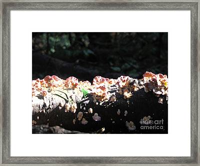 Pretty Fungus Framed Print