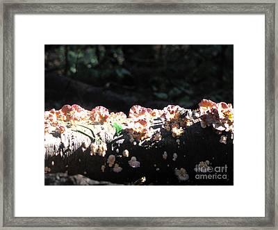 Pretty Fungus Framed Print by Melissa Stoudt