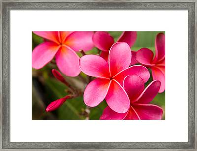 Pretty Hot In Pink Framed Print