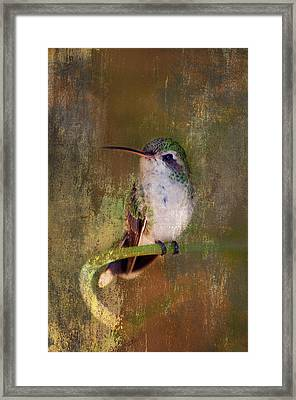 Pretty Hummer Framed Print