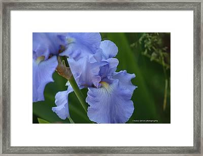 Pretty In Blue Framed Print