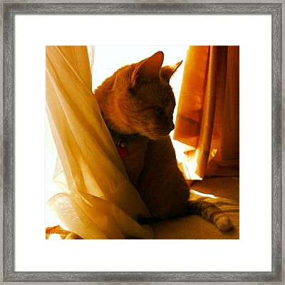 Pretty In Orange Framed Print by Thomasina Durkay