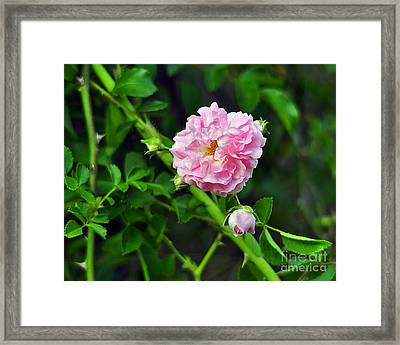 Pretty In Pink Framed Print by Al Powell Photography USA