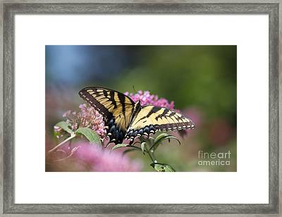 Pretty In Pink All Profits Go To Hospice Of The Calumet Area Framed Print