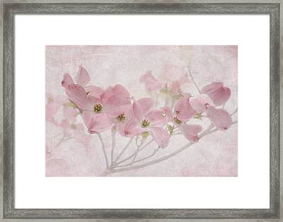 Pretty In Pink Framed Print by Angie Vogel