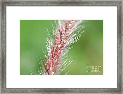 Framed Print featuring the photograph Pretty In Pink by Bianca Nadeau