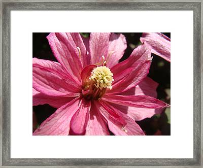 Pretty In Pink Framed Print by Cheryl Hoyle
