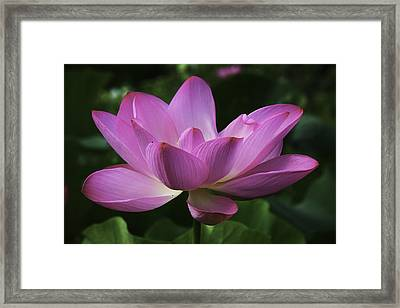 Framed Print featuring the photograph Pretty In Pink by Cindy Lark Hartman