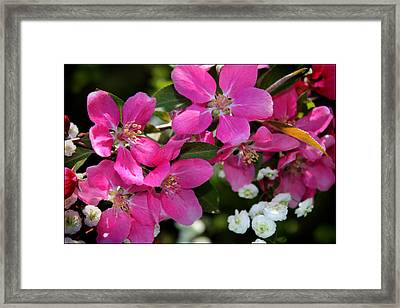 Pretty In Pink I Framed Print by Aya Murrells