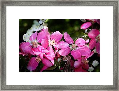Pretty In Pink Iv Framed Print by Aya Murrells