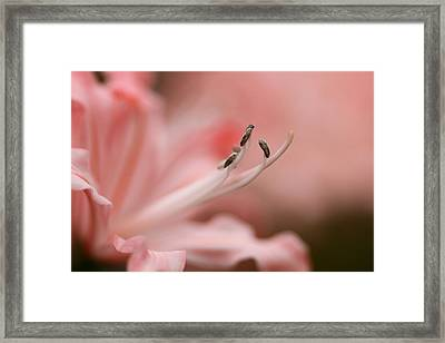 Pretty In Pink Framed Print by Jacqui Collett